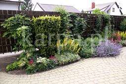 Projektowanie ogrodów, wycinka drzew, pielęgnacja ogrodów, prace ogrodnicze