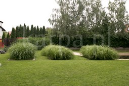 Nawadnianie, zakładanie ogrodów, przycinka drzew, karczowanie, opryski